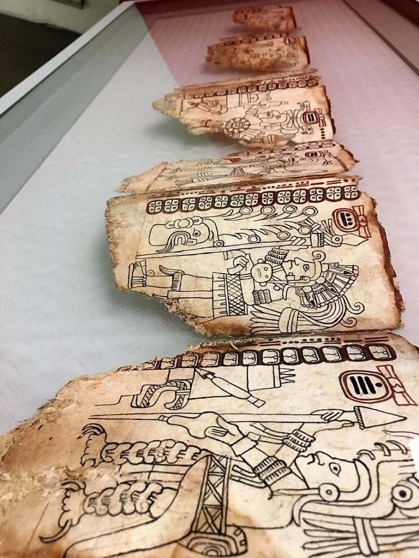 El Códice Maya de México llega al Museo de Guadalupe, gracias a un facsimilar elaborado en papel amate de fibras machacadas. Foto Pilar Cuair